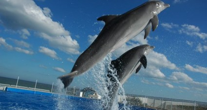 Florida Dolphin Tours and Transportation