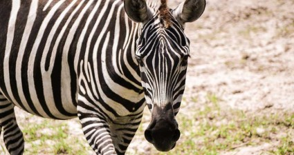 Safari Wilderness Ranch